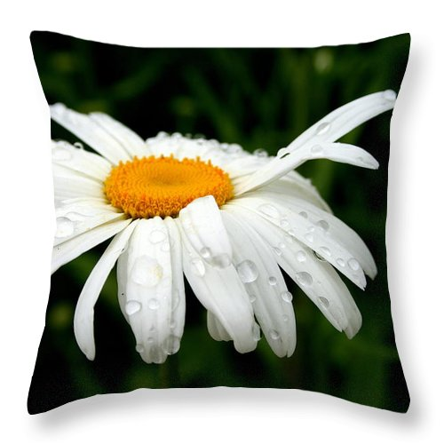 Nature Throw Pillow featuring the photograph He Loves Me He Loves Me Not by Kay Novy