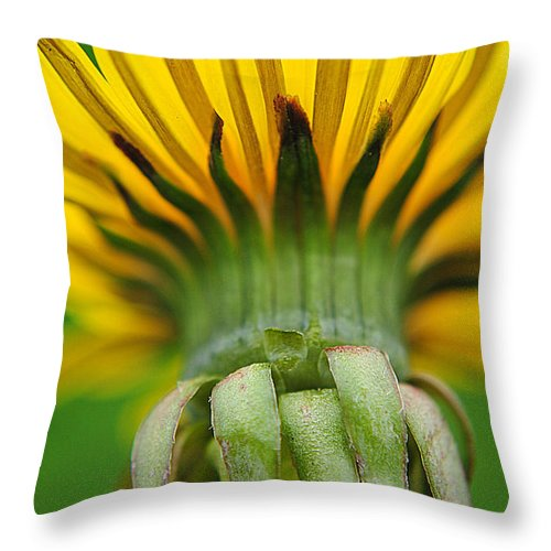Head Throw Pillow featuring the photograph Head Dress by Frozen in Time Fine Art Photography
