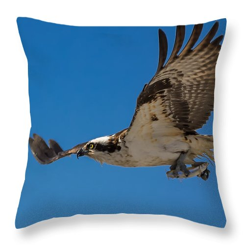 Osprey Throw Pillow featuring the photograph Heading Home by Kathleen Bishop