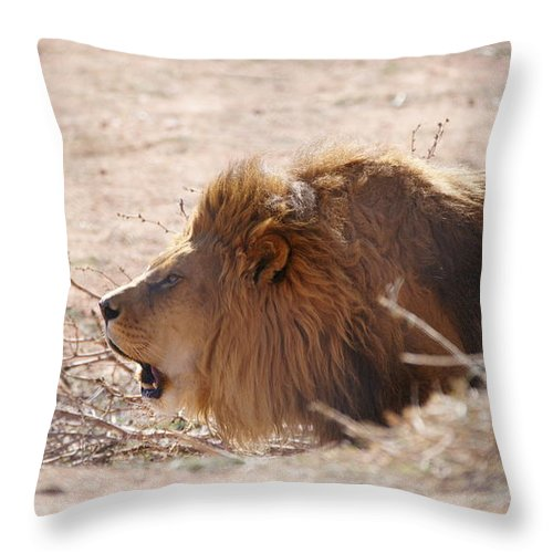 Male Lion Throw Pillow featuring the photograph Hear Me Roar by Crystal Harman
