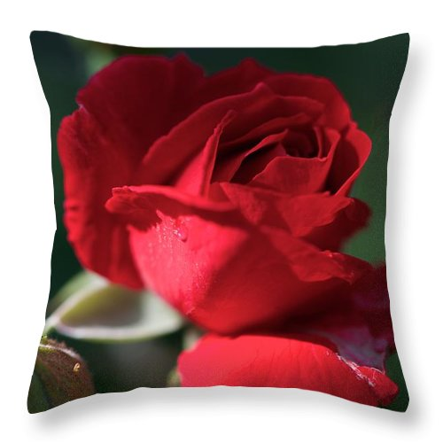 Flowers Throw Pillow featuring the photograph Heart Gently by Joseph Yarbrough