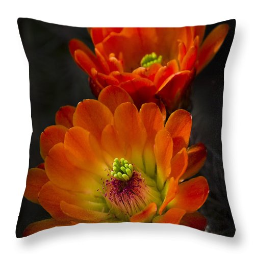 Arizona Throw Pillow featuring the photograph Hedgehogs In The Morning Light by Saija Lehtonen
