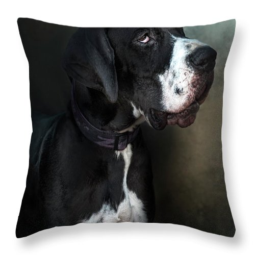 Pets Throw Pillow featuring the photograph Helga by Silversaltphoto.j.senosiain