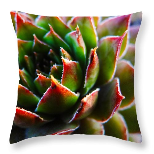 Nature Throw Pillow featuring the photograph Hen And Chick by Morgan Tyndale
