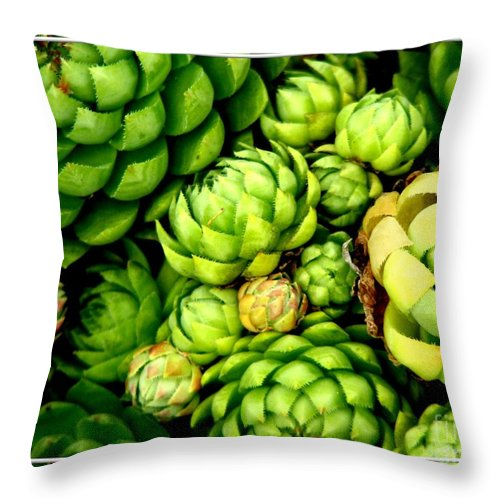 Hens And Chicks Throw Pillow featuring the photograph Hens And Chick Plants by Rose Santuci-Sofranko