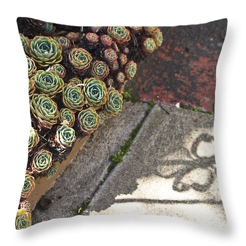 Succulents Throw Pillow featuring the photograph Hens And Chicks by Rosie McCobb