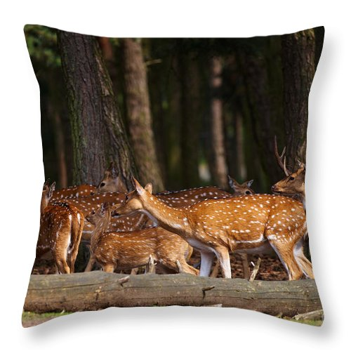 Herd Throw Pillow featuring the photograph Herd Of Deer In A Dark Forest by Nick Biemans