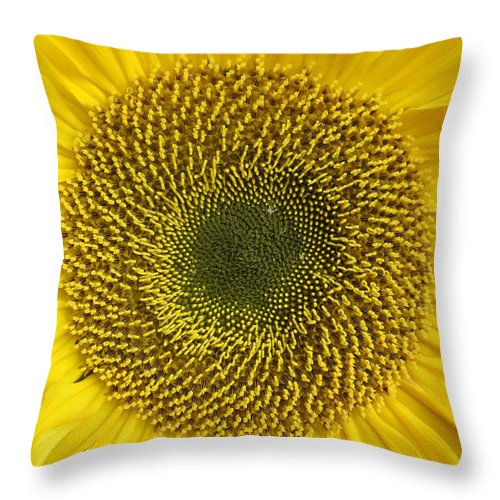Here Comes The Sun Throw Pillow For Sale By Rosita Larsson