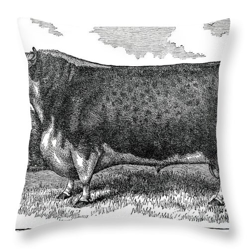 Engraving Throw Pillow featuring the digital art Hereford Bull by Nnehring