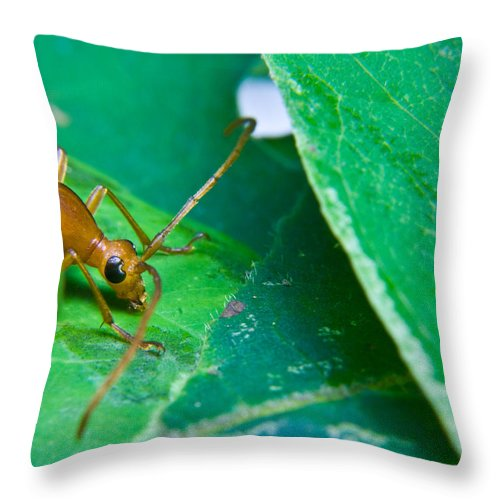 Beetle Throw Pillow featuring the photograph Here's Looking At You by Douglas Barnett