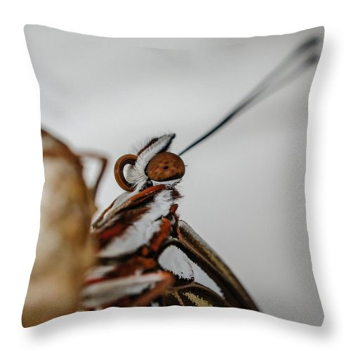 Butterfly Throw Pillow featuring the photograph Here's Looking At You Squared by TK Goforth