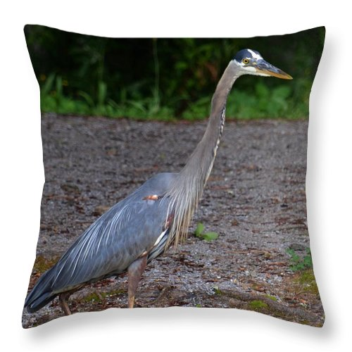 Heron 14-1 Throw Pillow featuring the photograph Heron 14-1 by Maria Urso