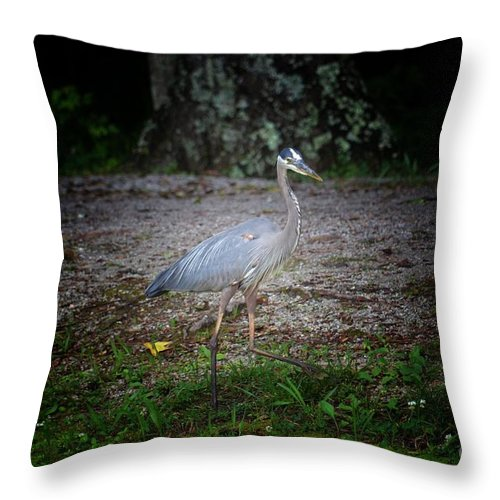 Heron 14-6 Throw Pillow featuring the photograph Heron 14-6 by Maria Urso