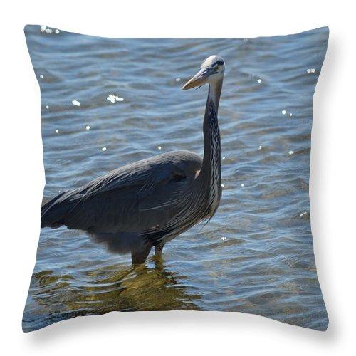 Florida Throw Pillow featuring the photograph Heron by Linda Kerkau