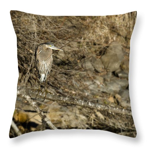 Heron Throw Pillow featuring the photograph Heron's Winter's Watch by Belinda Greb