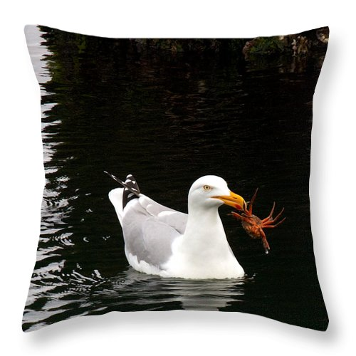 Holland Throw Pillow featuring the photograph Herring Gull With Crab by David Beebe