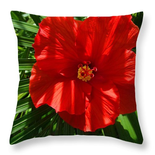 Hibiscus Throw Pillow featuring the photograph Hibiscus Good Morning by Pat Neely Stewart