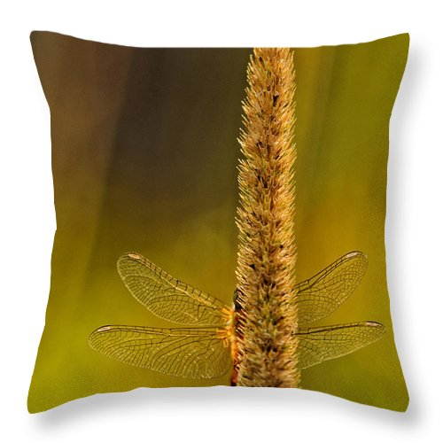 Dragonfly Throw Pillow featuring the photograph Hideout by Sue Capuano