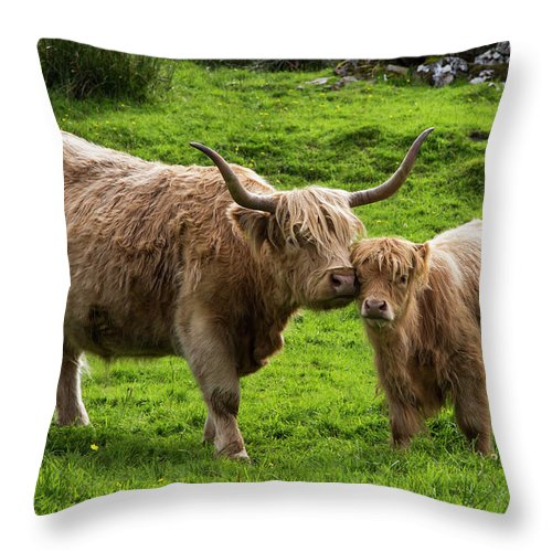 Horned Throw Pillow featuring the photograph Highland Cattle And Calf by John Short / Design Pics