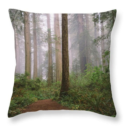 Tranquility Throw Pillow featuring the photograph Hiking Through Californias Redwoods by David Hoefler
