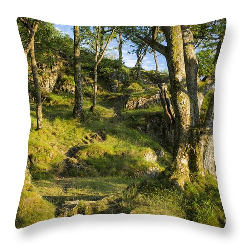 Country Throw Pillow featuring the photograph Hillside Forest by Brian Jannsen