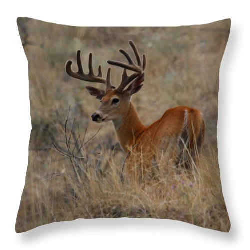 White Tailed Buck Throw Pillow featuring the photograph Hillside Giant by Steve McKinzie