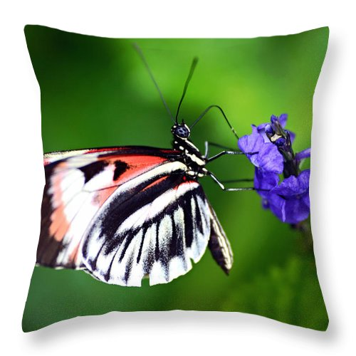 Butterfly Throw Pillow featuring the photograph Hint Of Red Butterfly by Vanessa Valdes