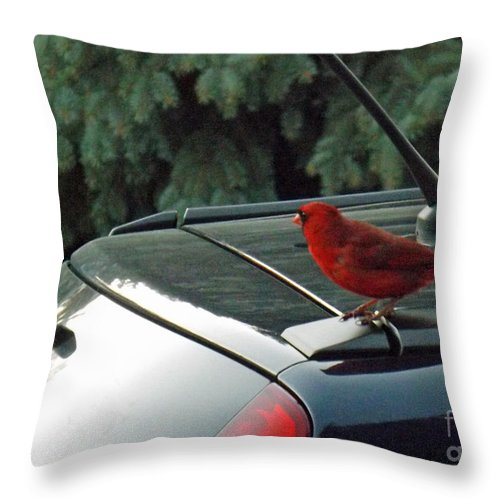Bird Throw Pillow featuring the photograph Hitching A Ride by Brenda Brown