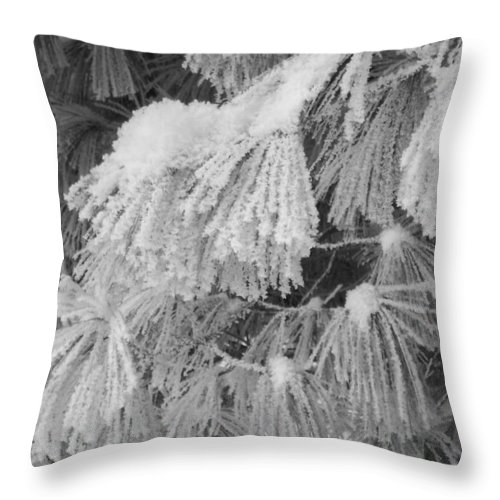 Pine Throw Pillow featuring the photograph Hoar Frost On Pine Branches by David T Wilkinson