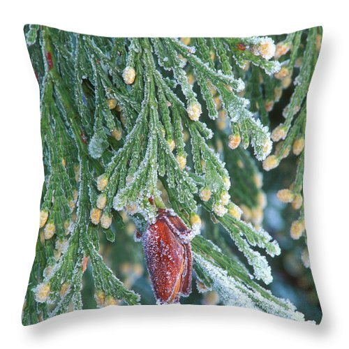 North America Throw Pillow featuring the photograph Hoarfrost On Pine Bough Yosemite National Park by Dave Welling