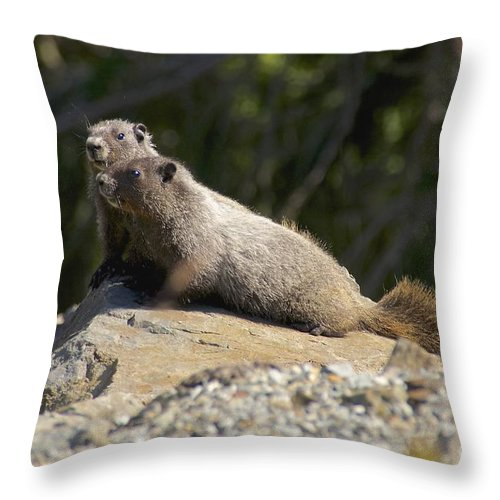 Photography Throw Pillow featuring the photograph Hoary Marmots by Sean Griffin