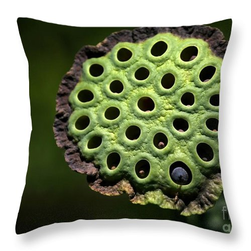Lotus Throw Pillow featuring the photograph Holey Moley by Sabrina L Ryan