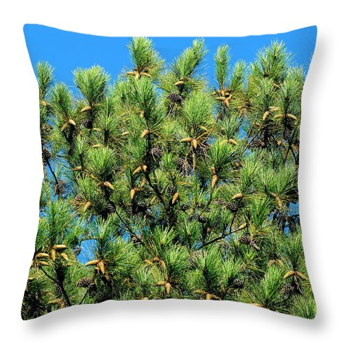 Autumn Throw Pillow featuring the photograph Holy See by Rafael Salazar