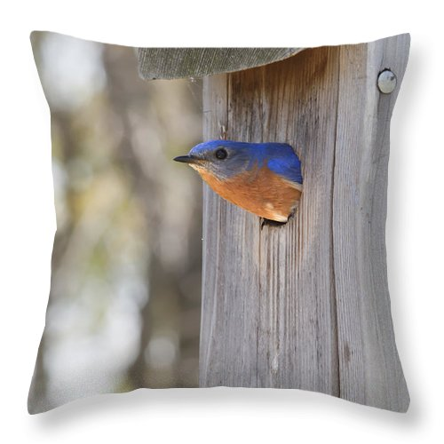 Bluebird Throw Pillow featuring the photograph Home Sweet Home by John Crothers