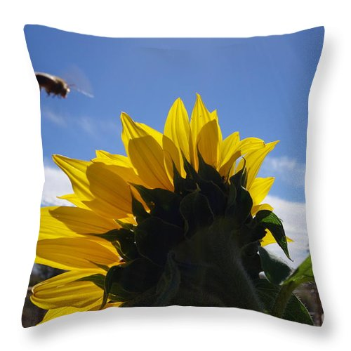 Bee Honey Flower Sun Flower Large Blue Sky Summer Flying Background Different Insects Gardens Outdoors Nature Fun Pretty Yellow Peddles Throw Pillow featuring the photograph Honey Bee In Flight. by Cindy Daly