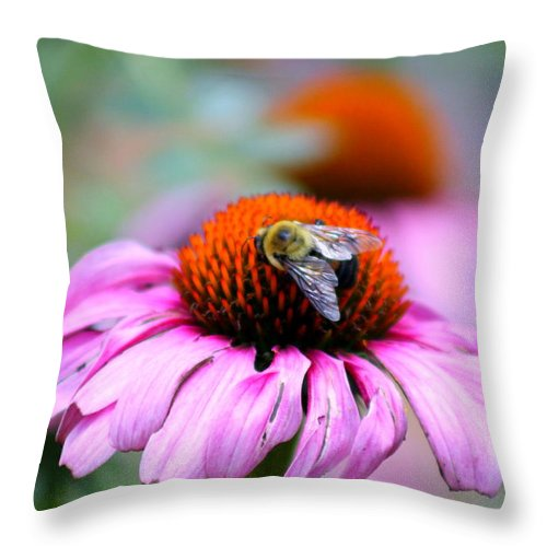 Honey Bee Throw Pillow featuring the photograph Honey Bee On A Pink Daisy by Mary Koval