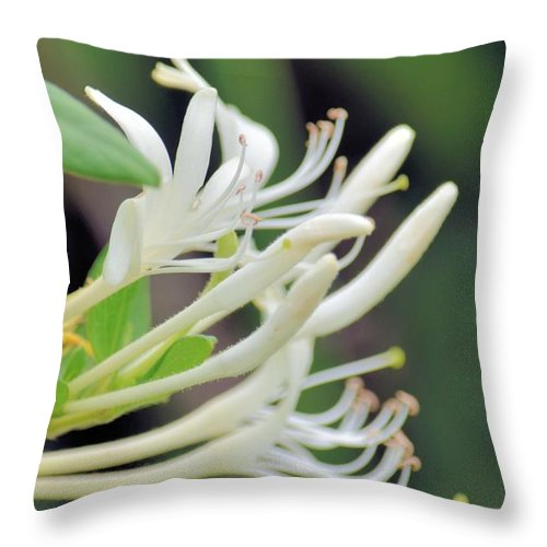 Honeysuckle Fingers Throw Pillow featuring the photograph Honeysuckle Fingers by Maria Urso