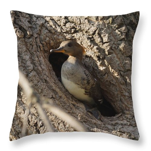 Merganser Throw Pillow featuring the photograph Hooded Merganser Getting Ready To Fly by Lori Tordsen