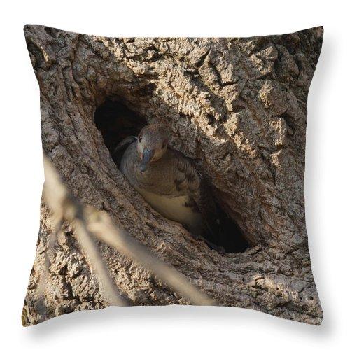 Merganser Throw Pillow featuring the photograph Hooded Merganser In The Knot Hole by Lori Tordsen
