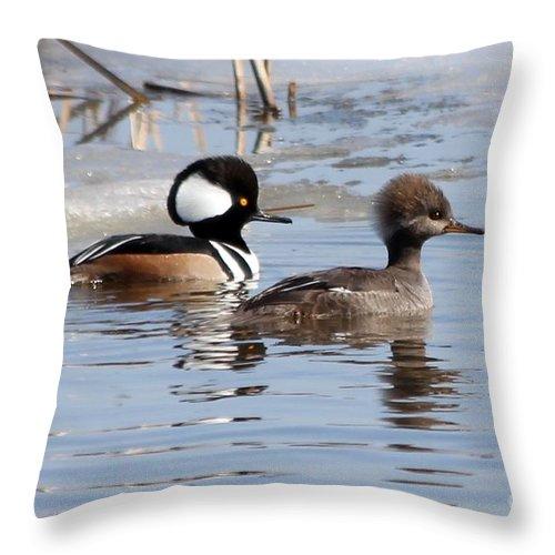 Hodded Throw Pillow featuring the photograph Hooded Merganser Pair by Lori Tordsen