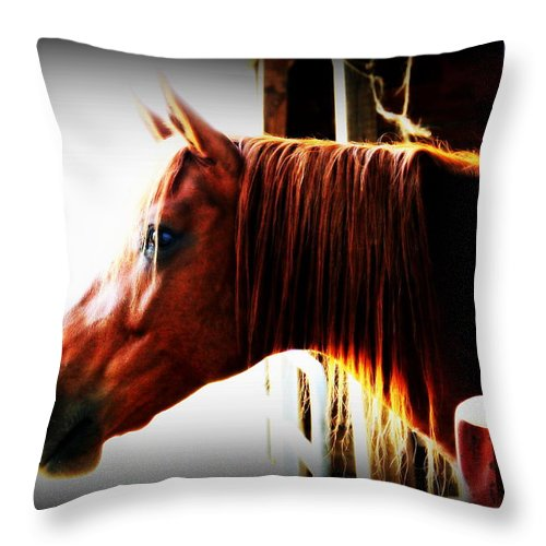 Todd Carter Hope In The Barn Horse Brown Animal Animals Feeding Time Hdr Noon Spoiled Throw Pillow featuring the photograph Hope In The Barn by Todd Carter