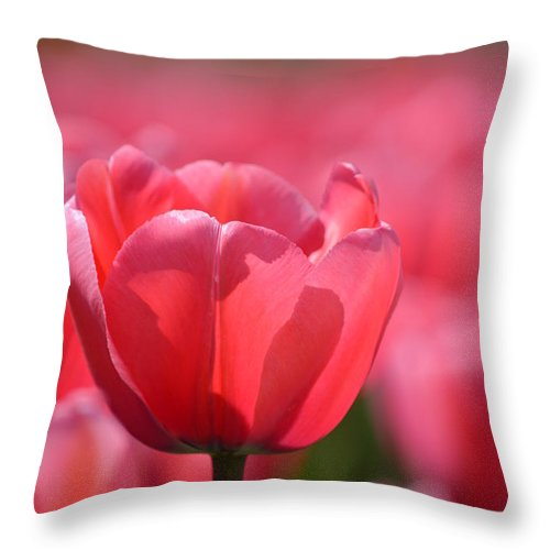 Tulip Throw Pillow featuring the photograph Hope by Jan Noblitt