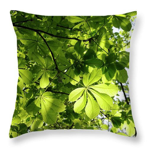Backgrounds Throw Pillow featuring the photograph Horse Chestnut Leaves by Jeffoto