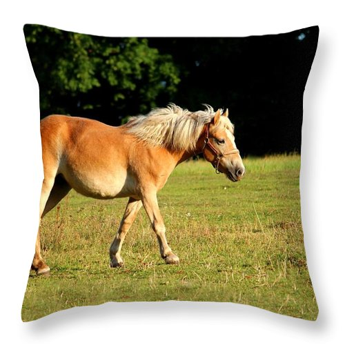 Horse Throw Pillow featuring the photograph Horse by Heike Hultsch