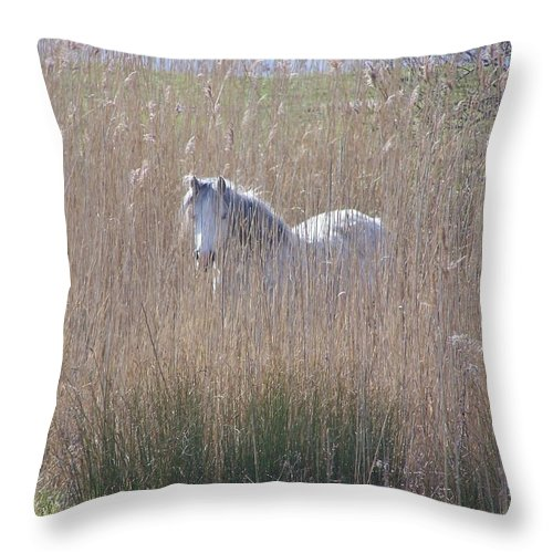 Horses Throw Pillow featuring the photograph Horse In The Grass by Christopher Rowlands