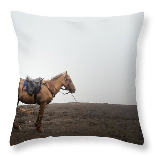 Horse Throw Pillow featuring the photograph Horse On A Mountain On A Foggy Day by Carlina Teteris
