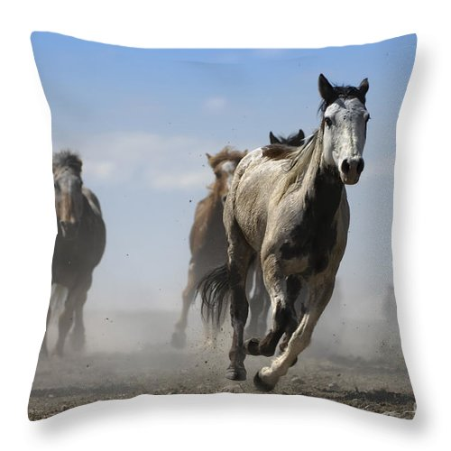 Horse Throw Pillow featuring the photograph Horse With No Name by Wildlife Fine Art