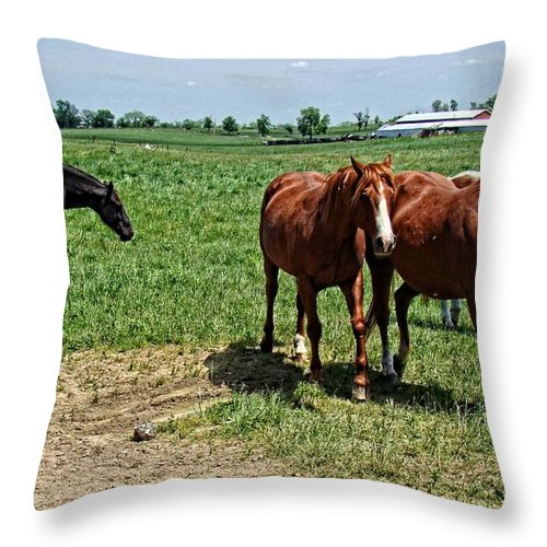 Horses Throw Pillow featuring the photograph Horses In The Pasture by Alice Gipson