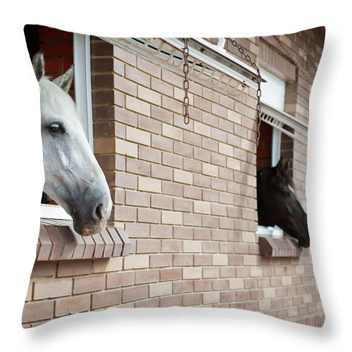 Horse Throw Pillow featuring the photograph Horses Looking From The Windows Of A by O sa