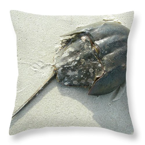 Crab Throw Pillow featuring the photograph Horseshoe Crab - Limulus Polyphemus by Mother Nature